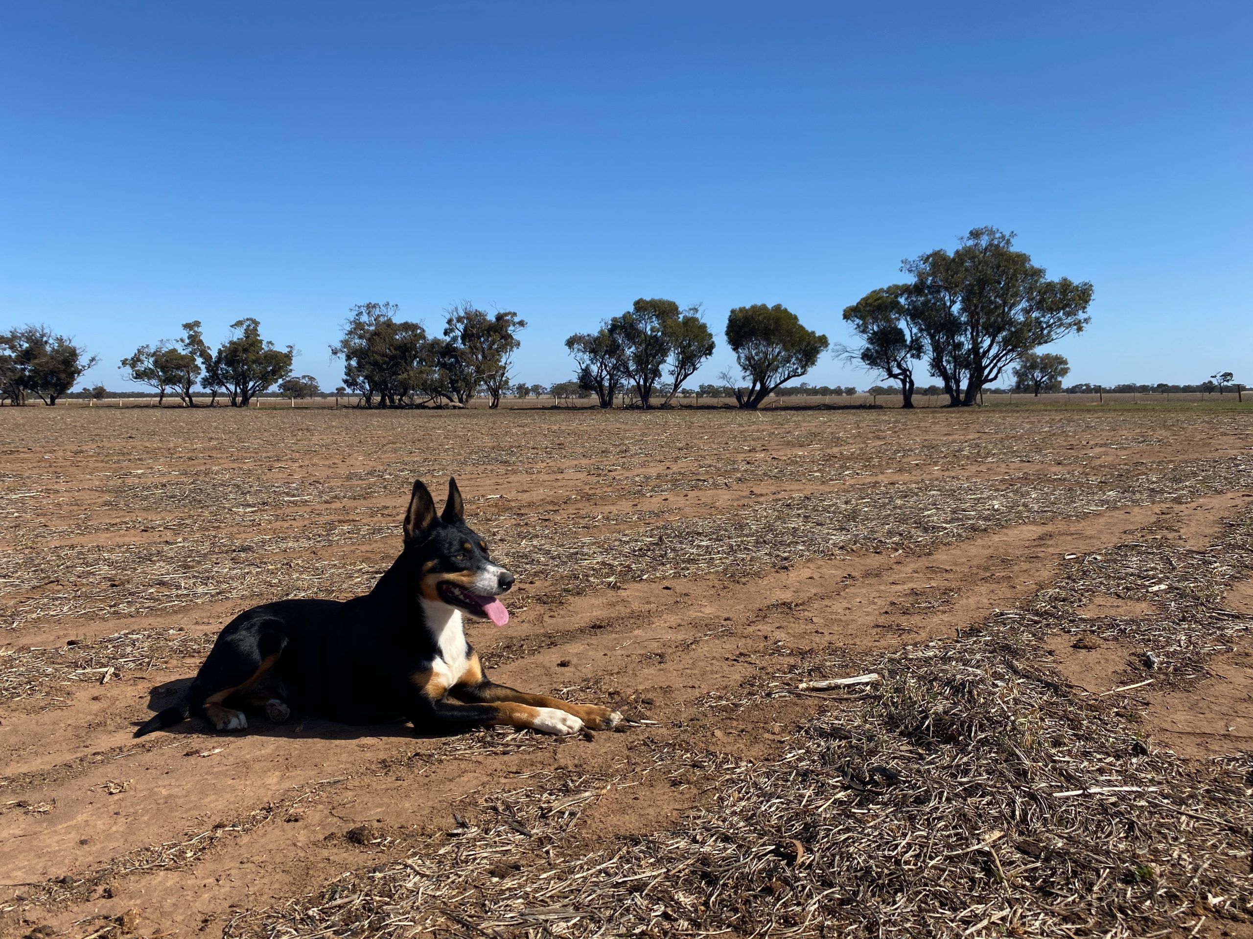Farm dogs put their paws up for climate action this Dog Day