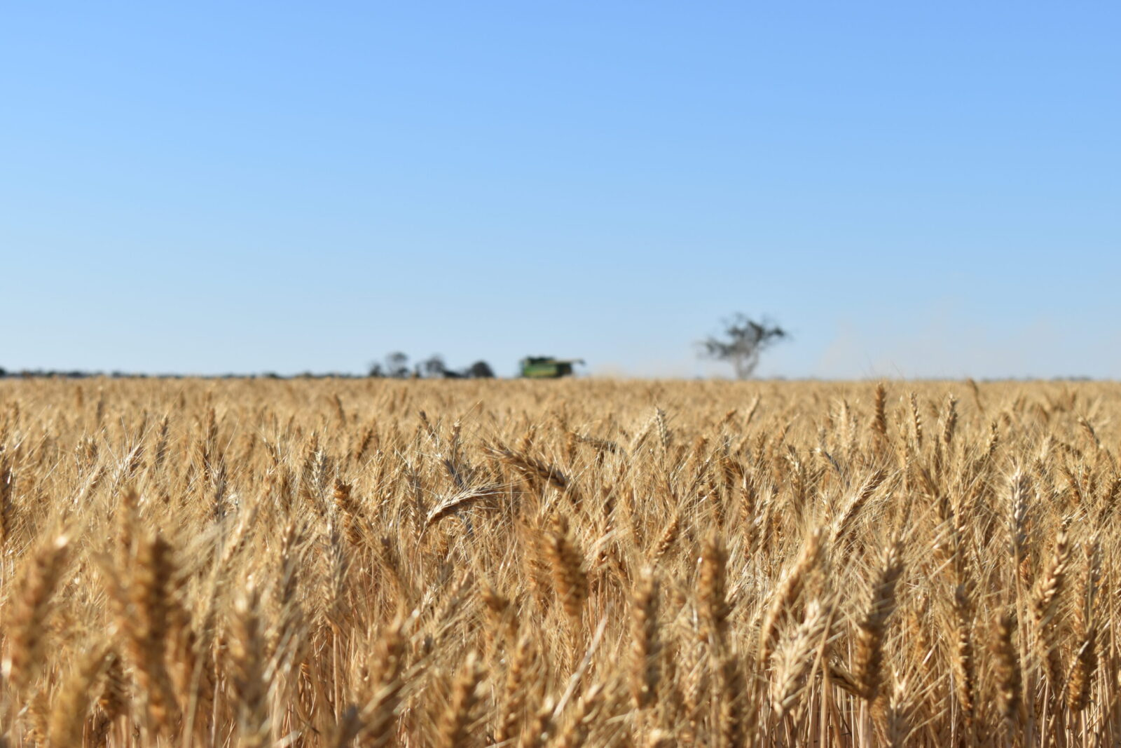 Farmers need support, not dress-ups, to reap benefits of climate action